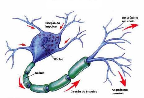 sistema-nervoso-60